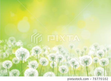 Vector spring bokeh background with white dandelions. White dandelions meadow. 78770102