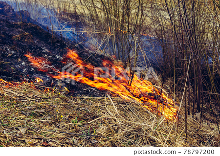Fallen dry grass is dangerous to the lives of small animals and insects, as well as harm to human health 78797200
