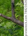 하늘소, 곤충, 벌레 78823026