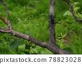 하늘소, 곤충, 벌레 78823028