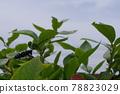 하늘소, 곤충, 벌레 78823029