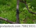 하늘소, 곤충, 벌레 78823031