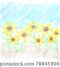 Sunflower field 78845900
