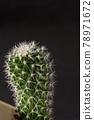 cacti, cactu, cactuse 78971672