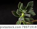 botanic, botanical, plant 78971918