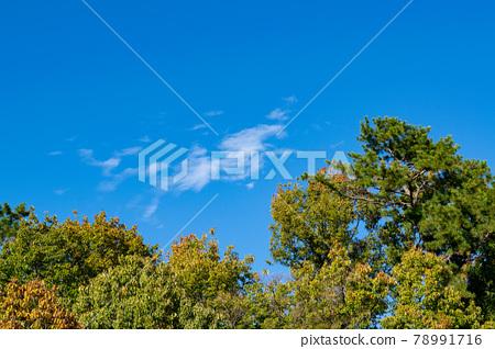 autumnal, pegasus, blue sky 78991716