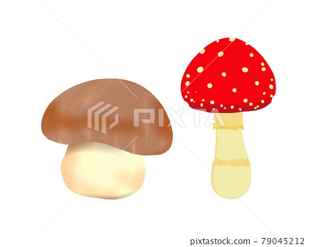 Brown and red mushrooms 79045212