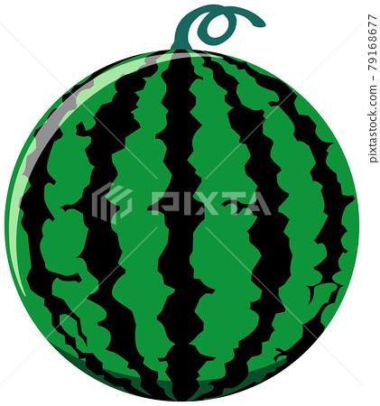 Watermelon illustration 79168677