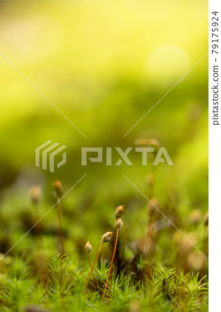 Moss growing ground 79175924