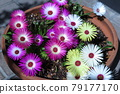 potted plants, potted plant, gardening 79177170
