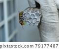 bee, nest, nests 79177487