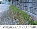 gravel, weeding, clean 79177488
