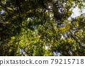 樹抬起頭來 79215718