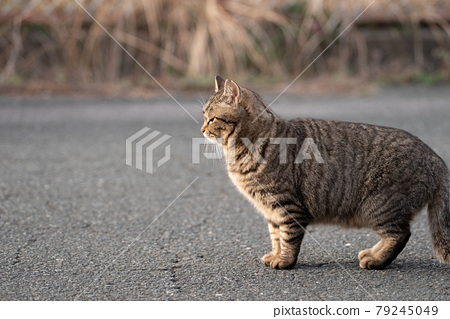 귀여운 고양이 79245049