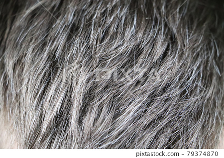 Going gray. Man gray and black hair roots. Close-up 79374870