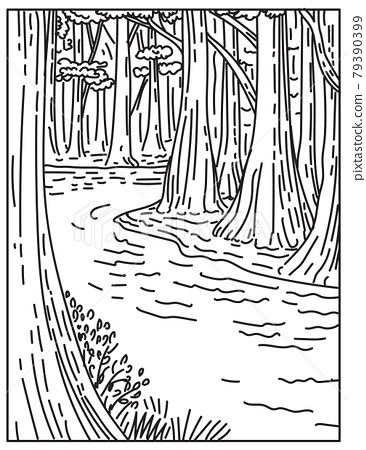 An Old Growth Bottomland Hardwood Forest in Congaree National Park in Central South Carolina United States Mono Line or Monoline Black and White Line Art 79390399