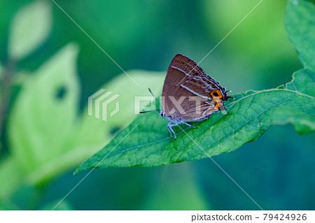 곤충, 벌레, 나비 79424926