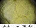 Far eastern Kelp macro close up under the light microscope, edible seaweed 79454315