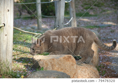 The cat in the city is cute 79476320
