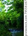 新鮮的綠色、河流和舊橋 79556167