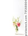 bloom, blossom, blossoms 79566664