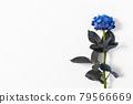 bloom, blossom, blossoms 79566669
