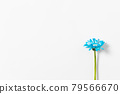 bloom, blossom, blossoms 79566670