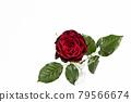bloom, blossom, blossoms 79566674