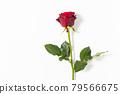 bloom, blossom, blossoms 79566675