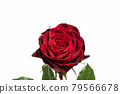 bloom, blossom, blossoms 79566678
