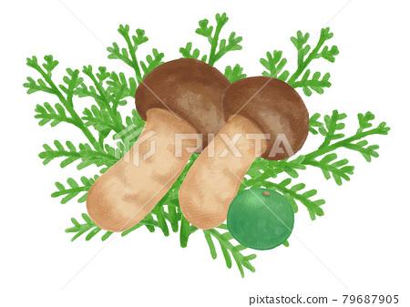 vegetables, vegetable, watercolour 79687905