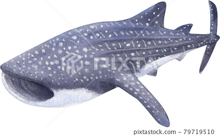 Whale shark day illustration watercolor 79719510