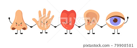 Five human senses organs kawaii characters set. Nose, ear, hand, tongue and eye hold hands. Cute sensory organs. See, hear, feel, smell and taste. Vector illustrations isolated on white background 79908581