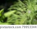 spider, bug, shirokanegumo 79953344