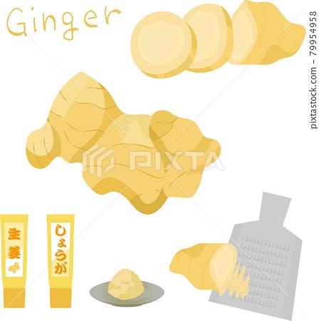 ginger, vector, vectors 79954958