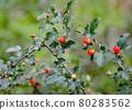 樹莓 80283562