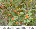 樹莓 80283563