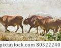 陽光耀眼,草原上的一群牛隻走著走著揚起了塵土。 80322240