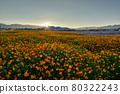 天氣晴朗,太陽升起,光芒耀眼,田野上的花朵正盛開。 80322243