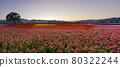 曙光明亮,天氣晴朗,漂亮的花正盛開著。 80322244