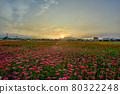 天氣晴朗,太陽升起,光芒耀眼,田野上的花朵正盛開。 80322248