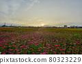 曙光明亮,天氣晴朗,漂亮的花正盛開著。 80323229