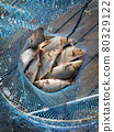 carp fish caught on fishing in a fishing cage 80329122