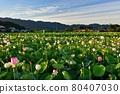 Fujiwara Kyo's lotus 80407030