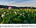 Fujiwara Kyo's lotus 80407031