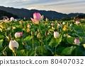 Fujiwara Kyo's lotus 80407032
