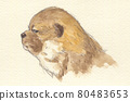 개, 강아지, 애완동물 80483653