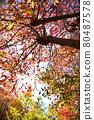 단풍, 가을, 나무 80487578