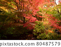가을의 정원 80487579