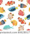열대어, 바다, 해양생물 80628017
